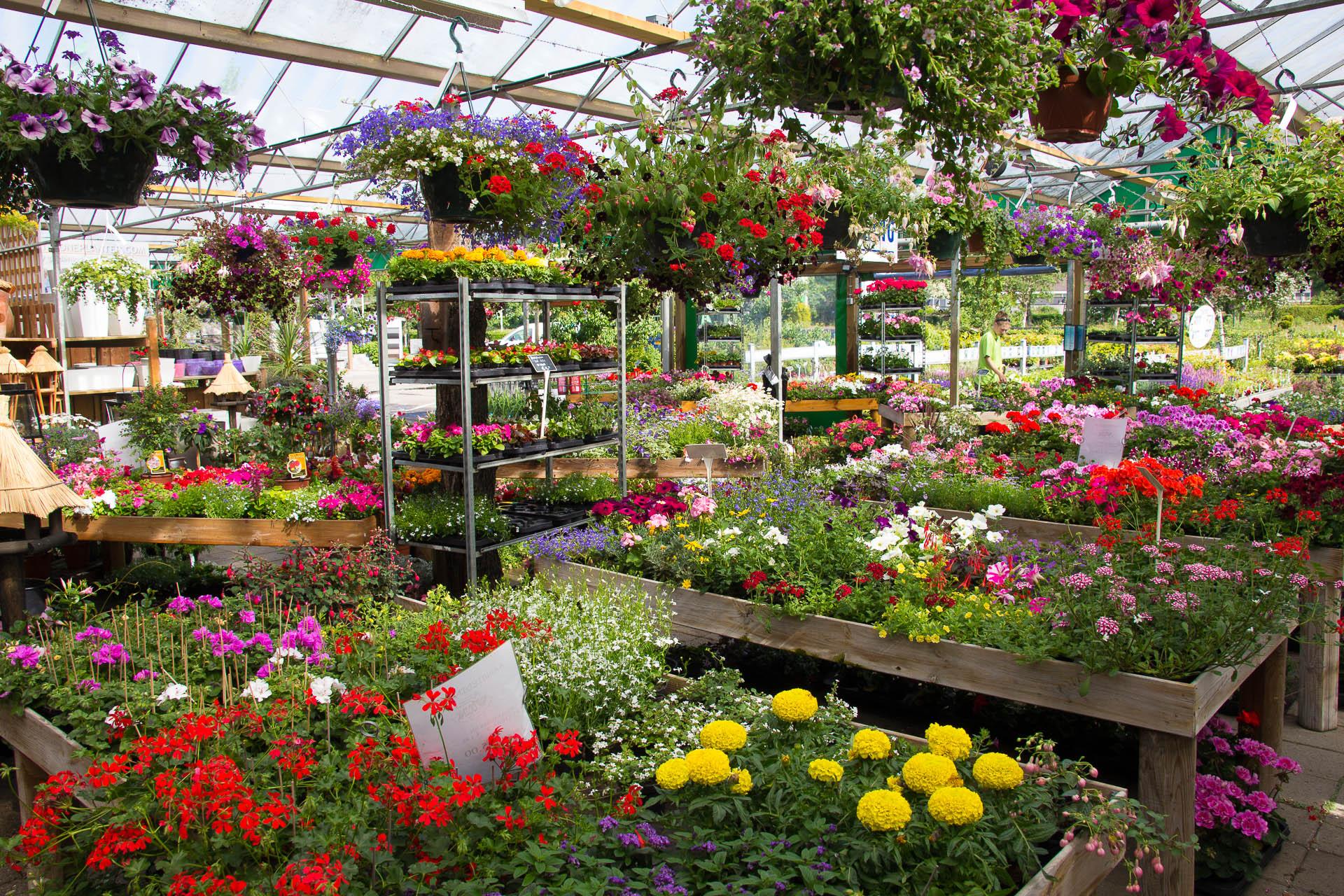 tuincentrum tuincentrum bloemsierkunst